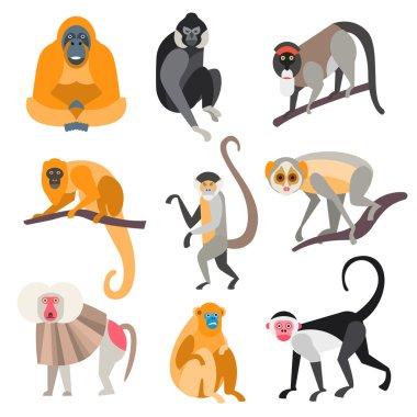 Set of Primates and Monkeys. Vector Illustration