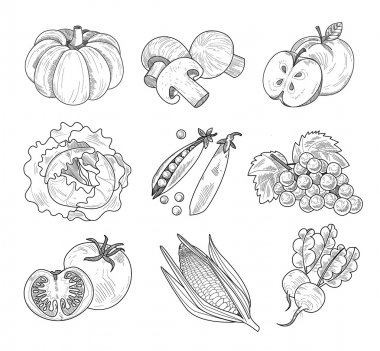 Fruit and Vegetables, Handdrawn