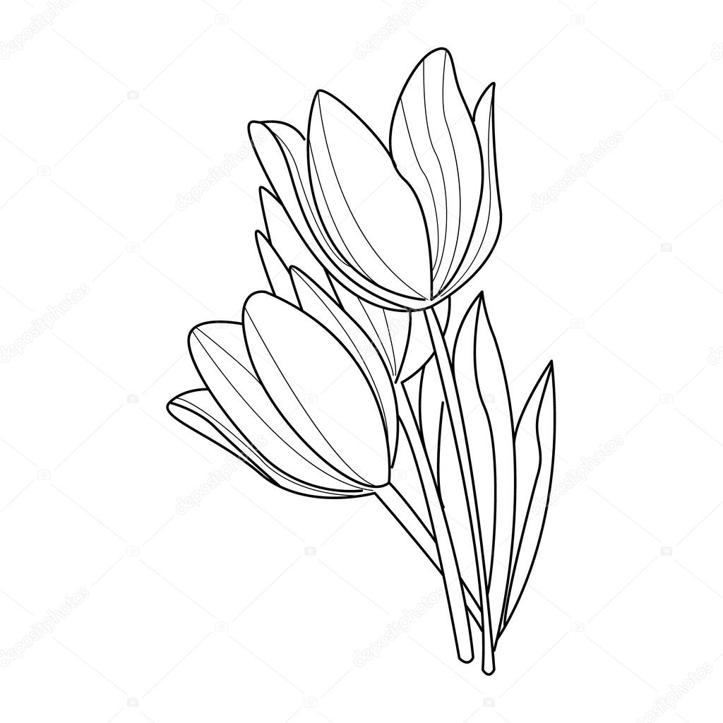 Tulip Flowers Sketch. Vector