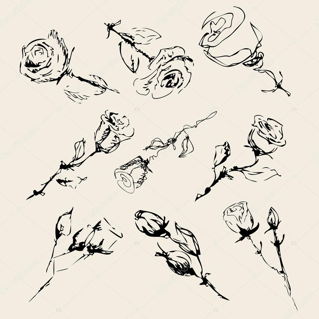 sketch of roses on a beige background