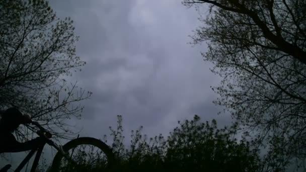 Silueta Biker v lese na večerní obloze