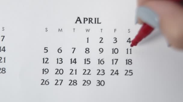 Female hand circle day in calendar date with a red marker. Business Basics Wall Calendar Planner and Organizer. APRIL 11th