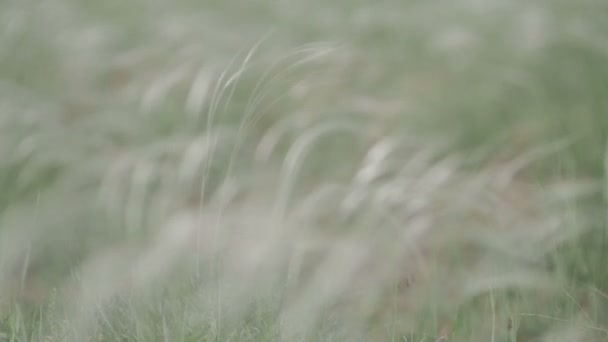 vítr, nabízející trávu v poli zelené pozadí makro Netříděné plochý barevný