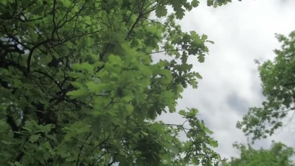 Leaves isolated on the sky and clouds background 3 axis stabilized medium  shot ungraded flat color