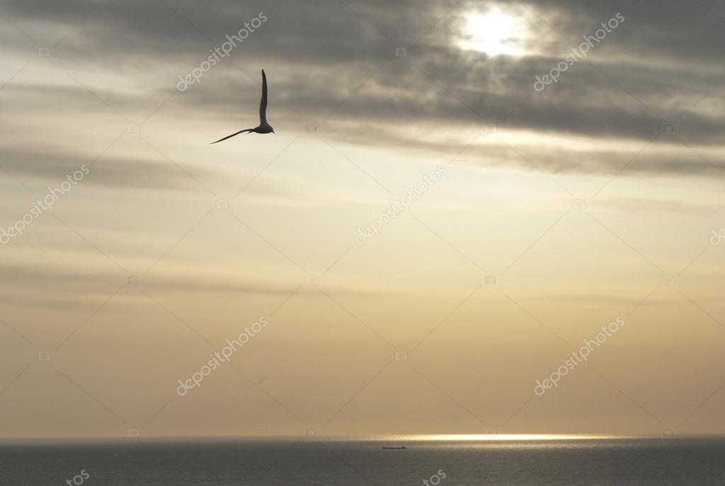 Gull over the sea in the distance shipbuilders