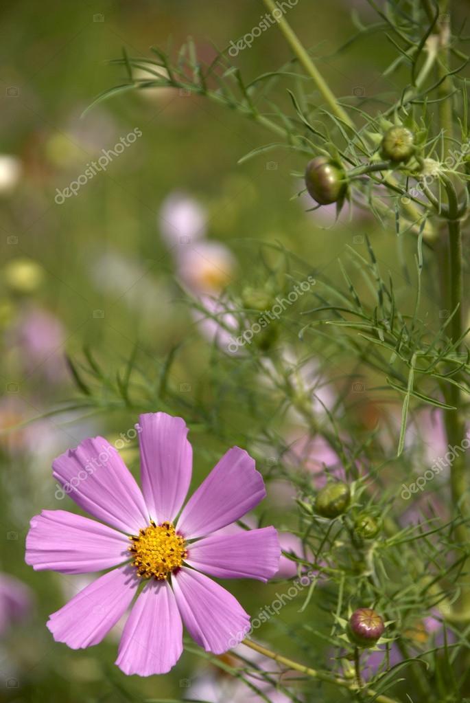 Flower lives