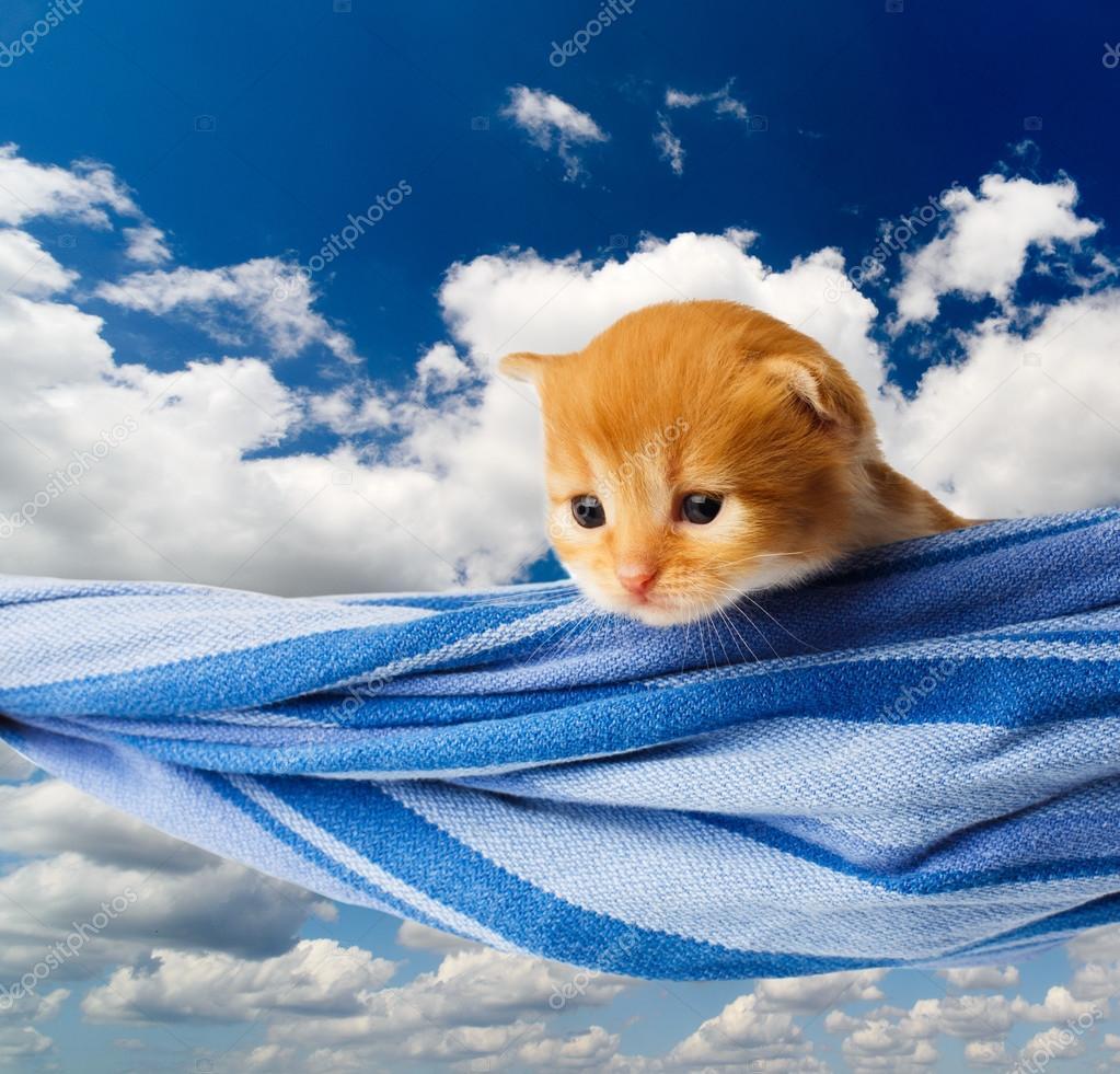 Cute red orange kitten in hammock at blue sky — Stock