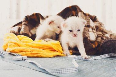 White Newborn kittens in a plaid blanket