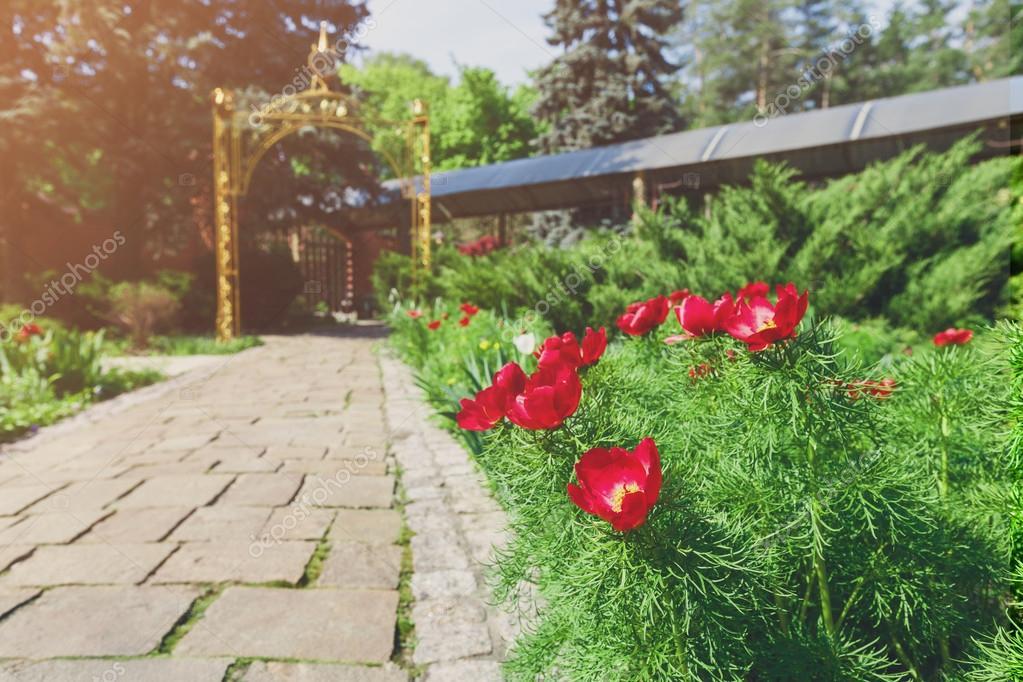Tulipes dans le jardin am nagement paysager photo - Jardin paysager photo ...