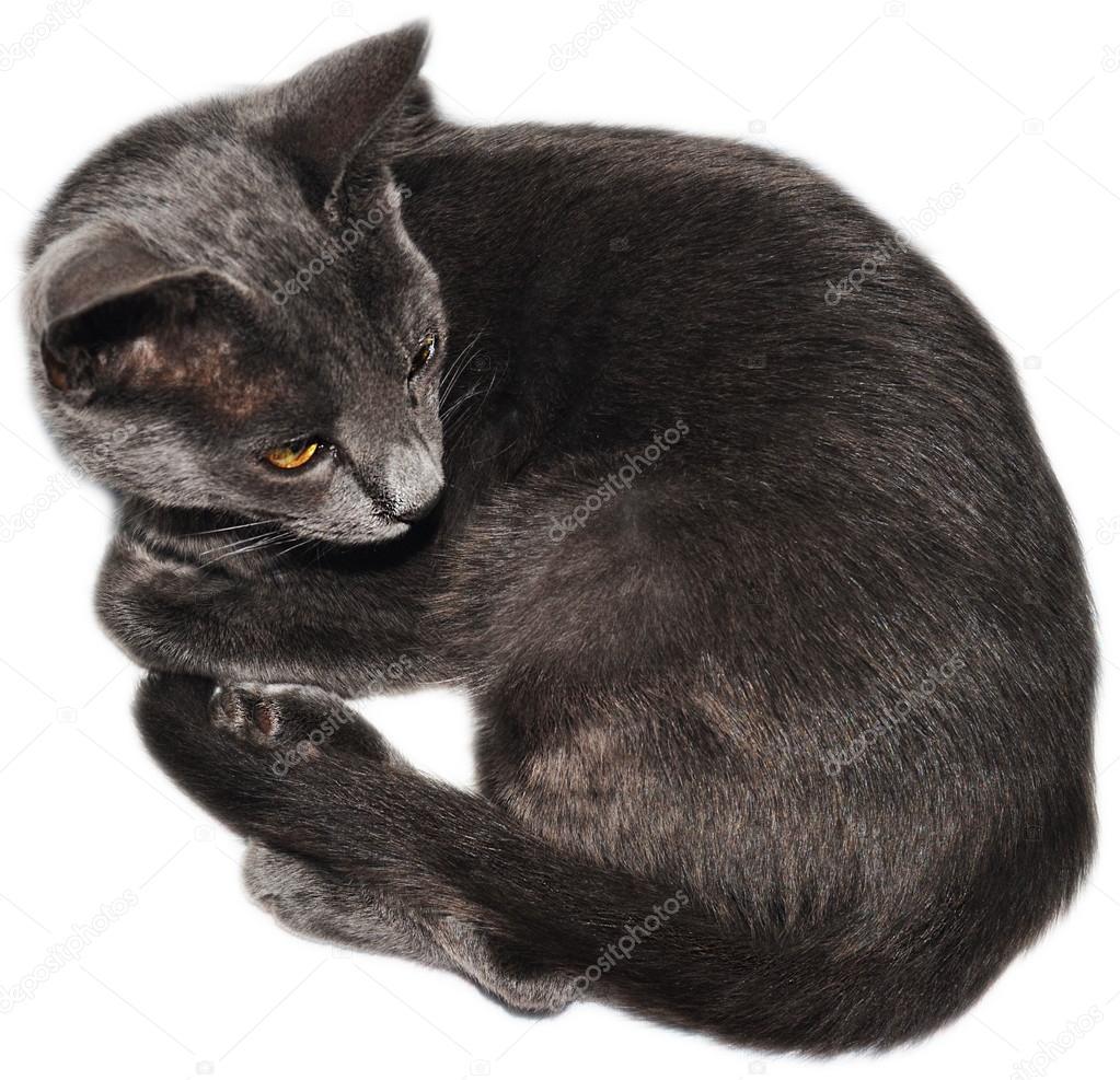 f39ecced9973 Εικόνες από γάτες που απομονώνονται σε λευκό φόντο σε διαφορετικές γωνίες —  Εικόνα από ...