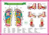 Fotografie Foot reflexology chart
