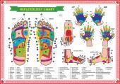 Fotografie Foot and Hand reflexology chart