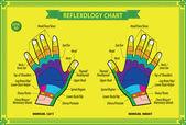 Fotografie Hand reflexology chart