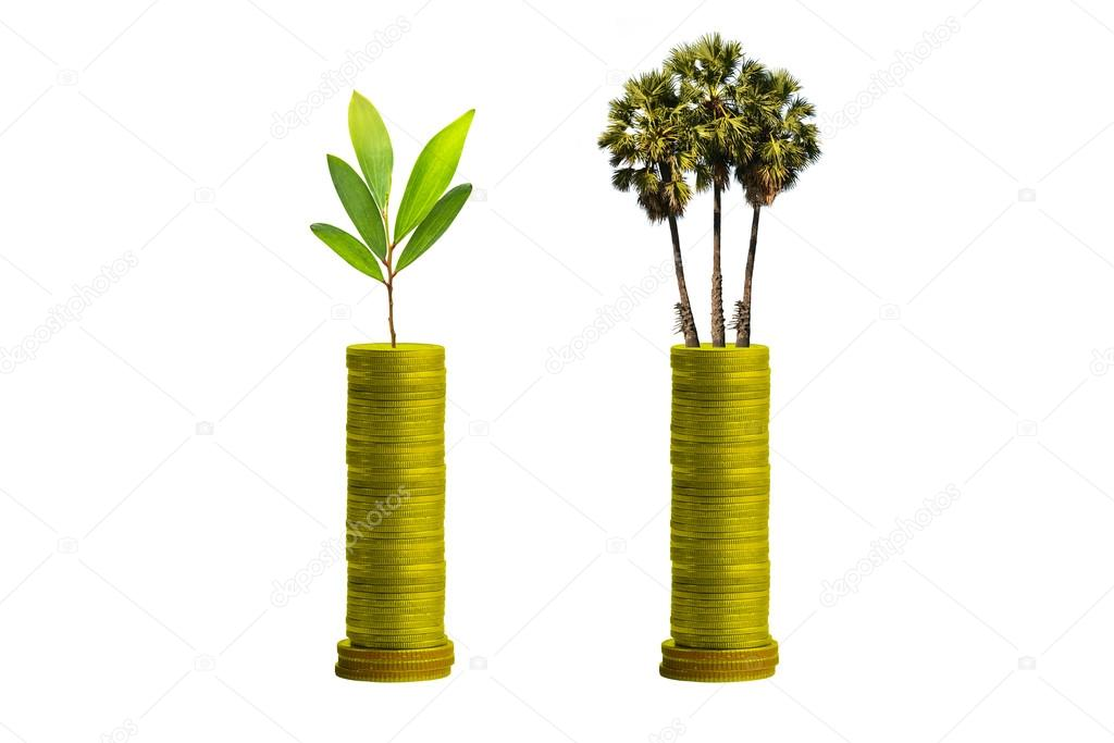 Investment concept,Trees on coins