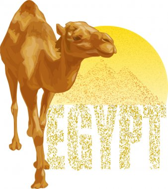 The vector image of a camel. Egypt.