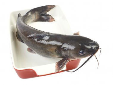 Channel catfish in a ceramic baking dish cooking isolated on whi