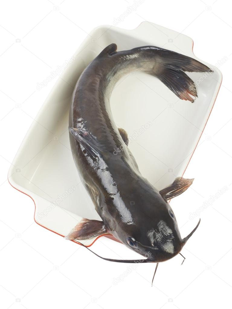 Channel catfish in a ceramic baking dish cooking isolated on white ...