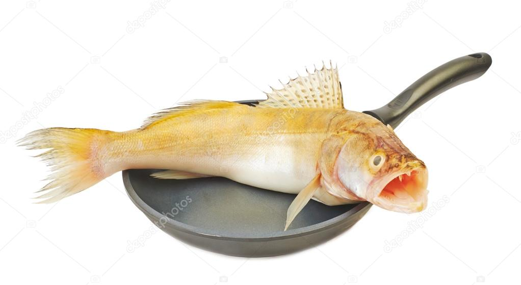 Great fresh fish pike in a pan