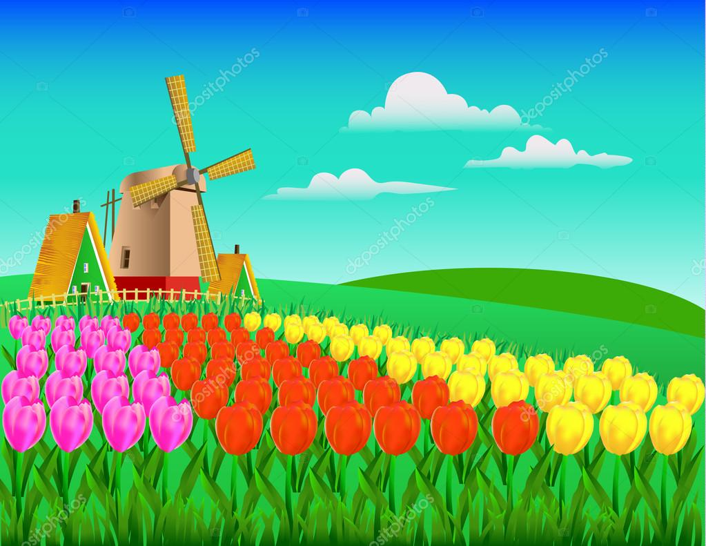 field of tulips in yellow, pink and red flowers with a mill, far
