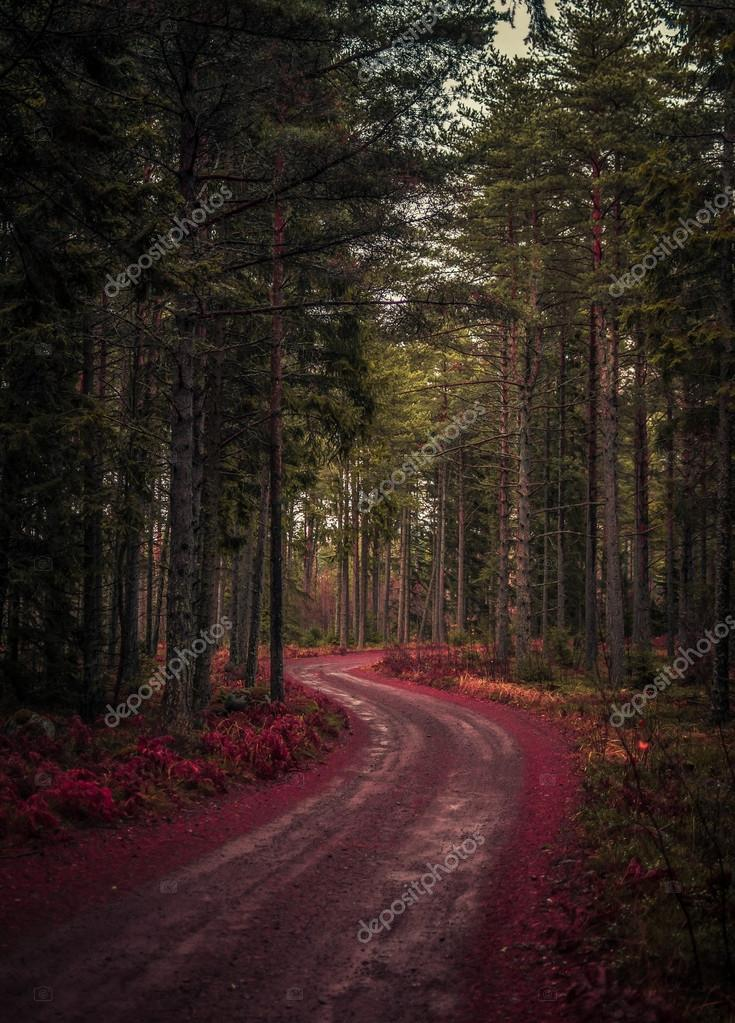 Фотообои Road in a beautiful forest
