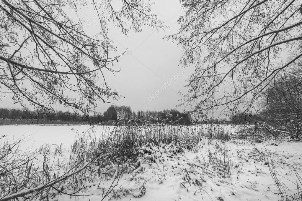 Nature in black and white