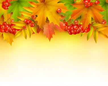Autumn background , colorful autumn leaves and rowan berries