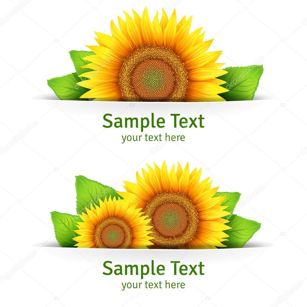 Fahne, floral Hintergrund oder Vorlage-Karte mit Sonnenblumen ...