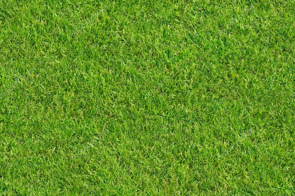 Seamless Texture Green Grass Field Top View Stock