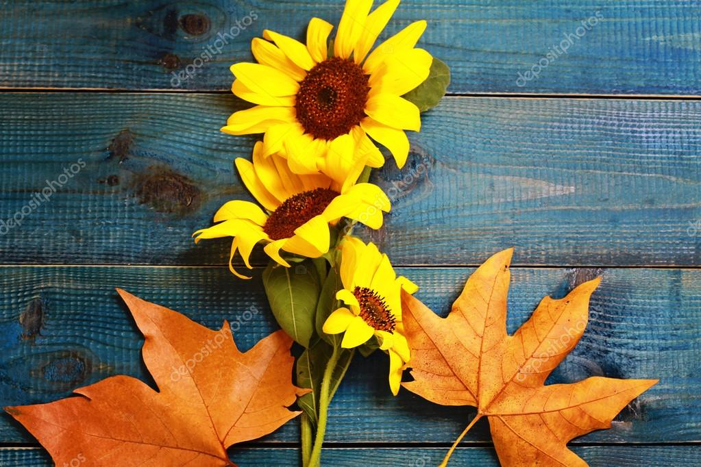 Yellow Autumn Leaves And Bouquet Of Sunflower On Blue Rustic Background Season Wallpaper Stock