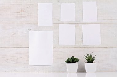 Mood board with empty blank pieces  paper  on the white wall and potted succulents. Scandinavian interior design, hipster style. Copy space image