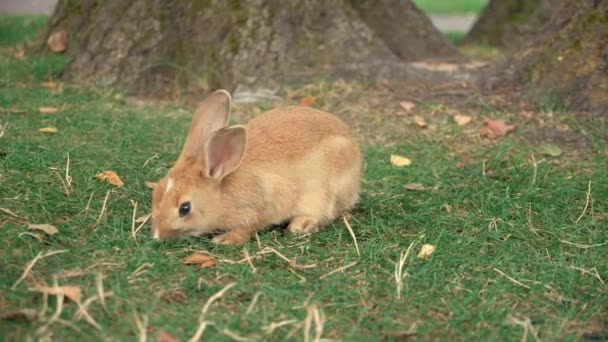 Small cute rabbit eating grass in public park