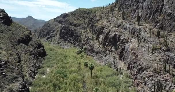 zöld csík növényzet a kaktusz sivatagban Baja California, légi felvétel