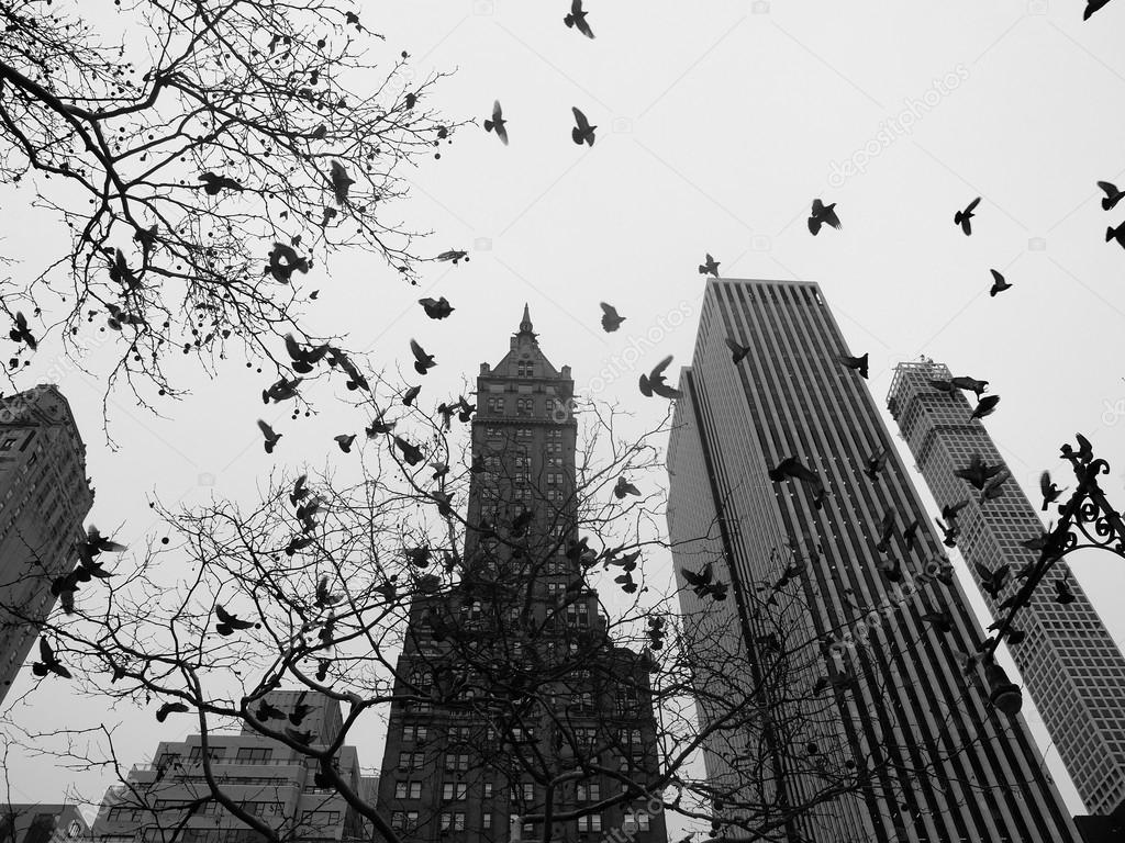 Black And White Central Park New York City Central Park