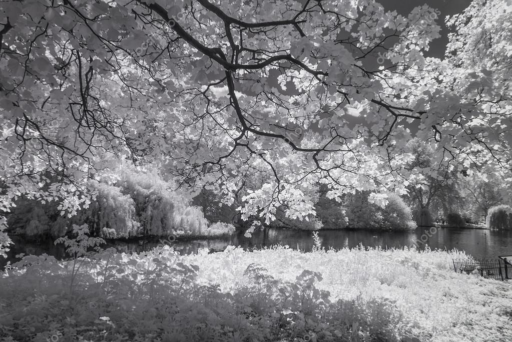 St James Park, London UK - Infrared black and white landscape
