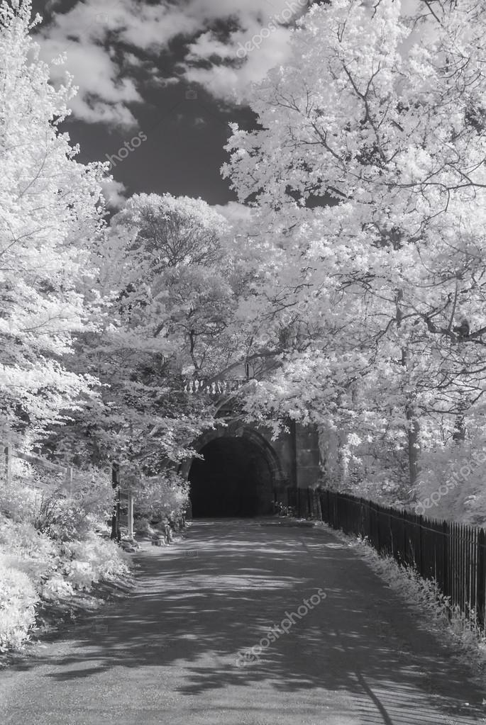 A path in Hyde Park, London - Infrared black and white landscape