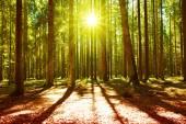 sonnenlicht in den grünen wald