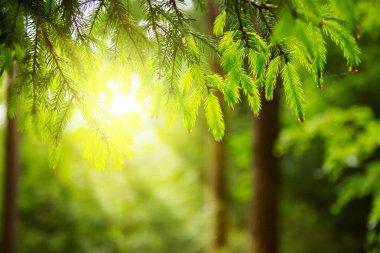 "Картина, постер, плакат, фотообои ""солнечный свет в зеленом лесу . фото"", артикул 103863810"