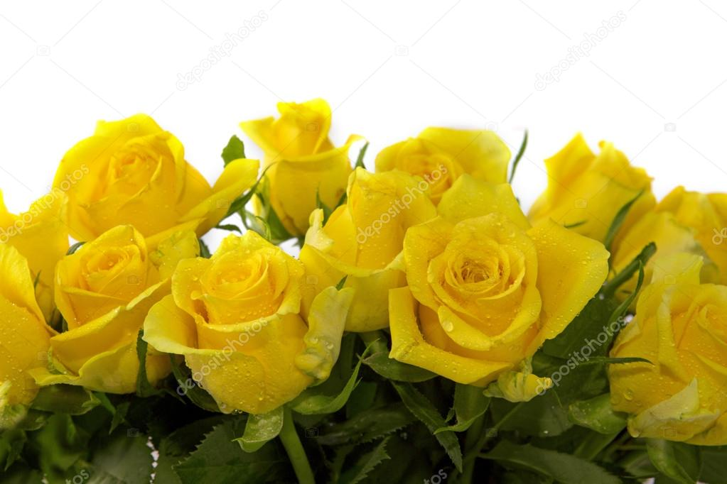 Yellow roses background.