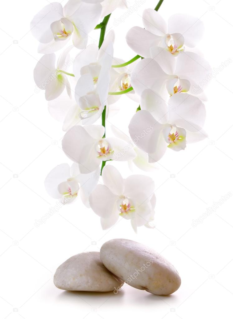 Massage Stones with Orchid.