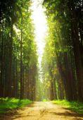napfény-erdő.