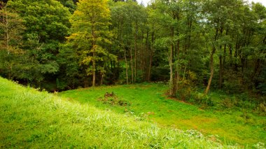 Green  meadow with trees .