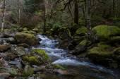 flusso nella foresta