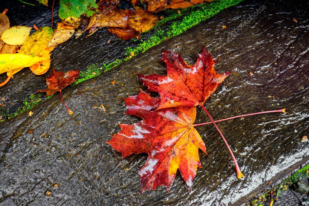 Im genes oto o con lluvia las hojas de oto o bajo - Descargar autumn leaves ...