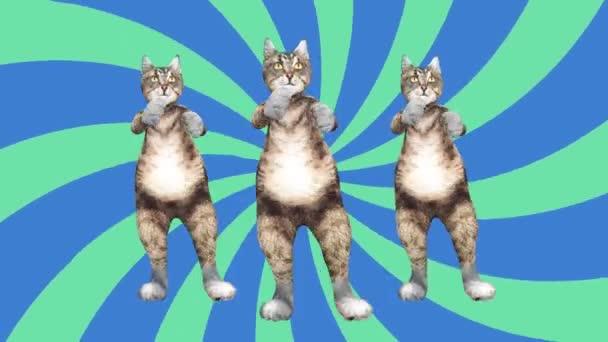 Koncept Cool a zábavné domácí mazlíček Kitty Dancing Gangnam styl přesunout na beat animované