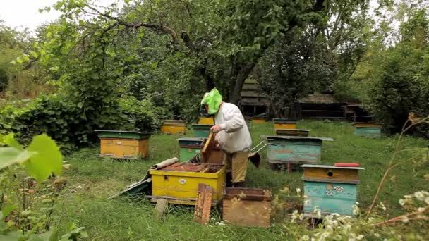 Beekeeper and apiary