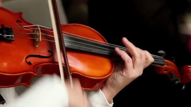hegedűs zenész