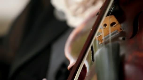Geigen-Nahaufnahme