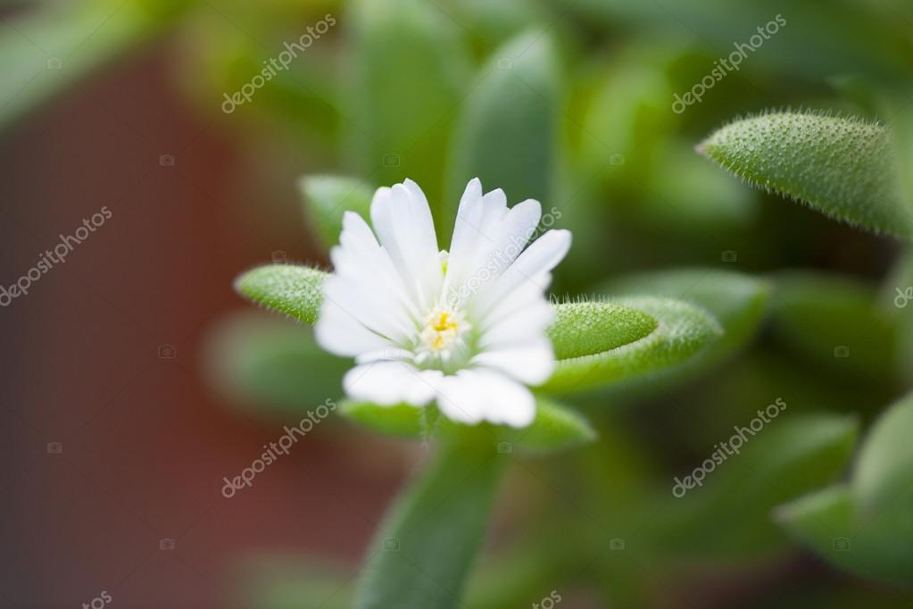 Beatiful white flower