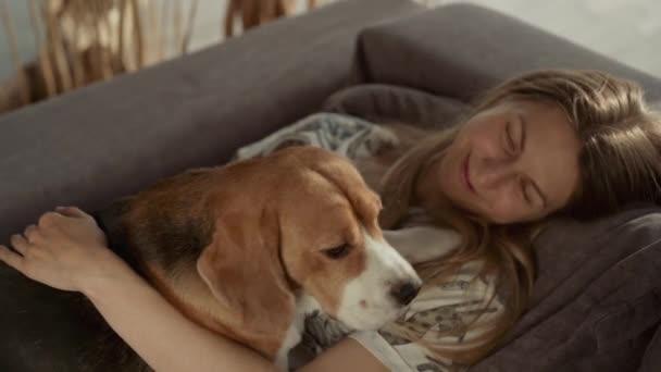 Erwachsene hübsche Frauen spielen mit ihrem Haustier, während sie auf der Couch im Wohnzimmer sitzen. Schöner Hund, der in die Kamera schaut, Rasse Beagle. Zeitlupe, Nahaufnahme