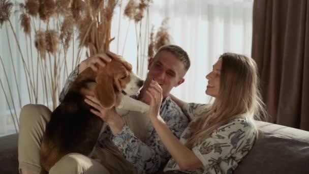 Ein junges Paar spielt mit seinem Haustier, während es auf der Couch im Wohnzimmer sitzt. Schöner Hund, Rasse Beagle. Zeitlupe